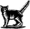 Cat 1 Pic